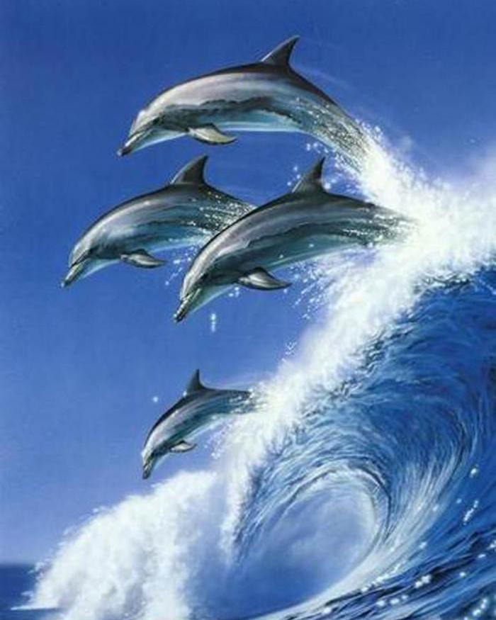 Красивые дельфины картинки на телефон