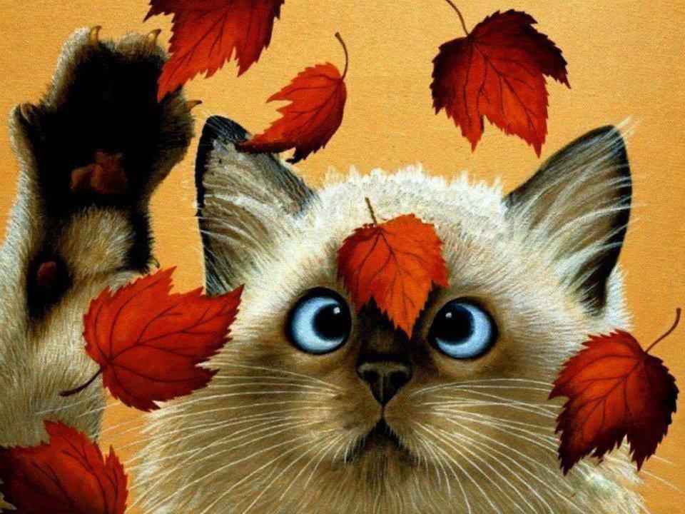 Осенний котик картинки
